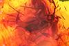 http://mczbase.mcz.harvard.edu/specimen_images/entomology/paleo/large/PALE-8827_syn1_Dolichopodidae.jpg