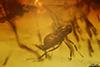 http://mczbase.mcz.harvard.edu/specimen_images/entomology/paleo/large/PALE-8858_Cecidomyiidae.jpg
