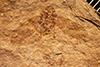 http://mczbase.mcz.harvard.edu/specimen_images/entomology/paleo/large/PALE-885_Palecphora_praevalens_type.jpg