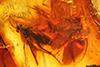 http://mczbase.mcz.harvard.edu/specimen_images/entomology/paleo/large/PALE-8865_Mycetophilidae.jpg