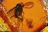 http://mczbase.mcz.harvard.edu/specimen_images/entomology/paleo/large/PALE-8926_Dolichopodidae.jpg