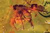http://mczbase.mcz.harvard.edu/specimen_images/entomology/paleo/large/PALE-8927_Dolichopodidae.jpg