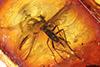 http://mczbase.mcz.harvard.edu/specimen_images/entomology/paleo/large/PALE-8938_Sciaridae.jpg