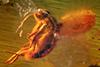 http://mczbase.mcz.harvard.edu/specimen_images/entomology/paleo/large/PALE-8947_Dolichopodidae_1.jpg