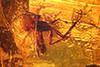 http://mczbase.mcz.harvard.edu/specimen_images/entomology/paleo/large/PALE-8967_Mycetophilidae.jpg