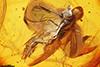 http://mczbase.mcz.harvard.edu/specimen_images/entomology/paleo/large/PALE-8968_syn1_Dolichopodidae.jpg
