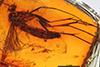 http://mczbase.mcz.harvard.edu/specimen_images/entomology/paleo/large/PALE-8983_Mycetophilidae.jpg