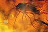 http://mczbase.mcz.harvard.edu/specimen_images/entomology/paleo/large/PALE-8993_syn2_Chironomidae.jpg