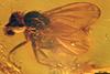 http://mczbase.mcz.harvard.edu/specimen_images/entomology/paleo/large/PALE-9007_Dolichopodidae.jpg