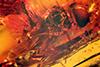 http://mczbase.mcz.harvard.edu/specimen_images/entomology/paleo/large/PALE-9029_Palaeosphegina_baccha.jpg