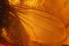 http://mczbase.mcz.harvard.edu/specimen_images/entomology/paleo/large/PALE-9064_syn1_Dolichopodidae.jpg