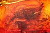 http://mczbase.mcz.harvard.edu/specimen_images/entomology/paleo/large/PALE-9069_Dolichopodidae.jpg