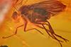 http://mczbase.mcz.harvard.edu/specimen_images/entomology/paleo/large/PALE-9074_Palaeomedeterus_sp.jpg
