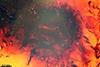 http://mczbase.mcz.harvard.edu/specimen_images/entomology/paleo/large/PALE-9080_Syrphidae_qm.jpg