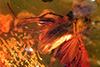 http://mczbase.mcz.harvard.edu/specimen_images/entomology/paleo/large/PALE-9141_Dolichopodidae.jpg