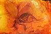 http://mczbase.mcz.harvard.edu/specimen_images/entomology/paleo/large/PALE-9163_Dolichopodidae.jpg
