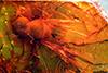 http://mczbase.mcz.harvard.edu/specimen_images/entomology/paleo/large/PALE-9200_Syrphidae.jpg