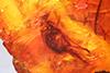 http://mczbase.mcz.harvard.edu/specimen_images/entomology/paleo/large/PALE-9290_Prohercostomus_sp.jpg