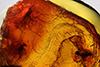 http://mczbase.mcz.harvard.edu/specimen_images/entomology/paleo/large/PALE-9321_Dolichopodidae.jpg