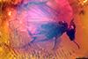 http://mczbase.mcz.harvard.edu/specimen_images/entomology/paleo/large/PALE-9321_syn1_Dolichopodidae.jpg