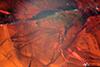 http://mczbase.mcz.harvard.edu/specimen_images/entomology/paleo/large/PALE-9321_syn3_Dolichopodidae.jpg