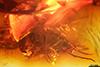 http://mczbase.mcz.harvard.edu/specimen_images/entomology/paleo/large/PALE-9337_Dolichopodidae.jpg