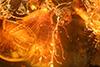 http://mczbase.mcz.harvard.edu/specimen_images/entomology/paleo/large/PALE-9383_Simuliidae.jpg