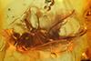 http://mczbase.mcz.harvard.edu/specimen_images/entomology/paleo/large/PALE-9420_Dolichopodidae.jpg