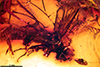 http://mczbase.mcz.harvard.edu/specimen_images/entomology/paleo/large/PALE-9448_Palaeosphegina_elegantula.jpg