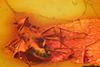 http://mczbase.mcz.harvard.edu/specimen_images/entomology/paleo/large/PALE-9456_Dolichopodidae.jpg