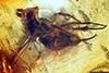 http://mczbase.mcz.harvard.edu/specimen_images/entomology/paleo/large/PALE-9482_Dolichopodidae.jpg