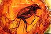 http://mczbase.mcz.harvard.edu/specimen_images/entomology/paleo/large/PALE-9488_Mycetophilidae.jpg
