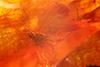 http://mczbase.mcz.harvard.edu/specimen_images/entomology/paleo/large/PALE-9501_Sciaridae.jpg