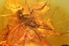 http://mczbase.mcz.harvard.edu/specimen_images/entomology/paleo/large/PALE-9525_Dolichopodidae.jpg