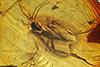 http://mczbase.mcz.harvard.edu/specimen_images/entomology/paleo/large/PALE-9613_Sciaridae.jpg
