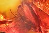 http://mczbase.mcz.harvard.edu/specimen_images/entomology/paleo/large/PALE-9621_Sciaridae.jpg