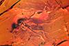 http://mczbase.mcz.harvard.edu/specimen_images/entomology/paleo/large/PALE-9628_Dolichopodidae_1.jpg