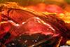 http://mczbase.mcz.harvard.edu/specimen_images/entomology/paleo/large/PALE-9643_Dolichopodidae_2.jpg