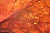 http://mczbase.mcz.harvard.edu/specimen_images/entomology/paleo/large/PALE-9644_syn2_Brachycera.jpg