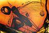 http://mczbase.mcz.harvard.edu/specimen_images/entomology/paleo/large/PALE-9745_Mycetophilidae.jpg