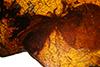 http://mczbase.mcz.harvard.edu/specimen_images/entomology/paleo/large/PALE-9802_syn1_Raphidia_sp_3.jpg