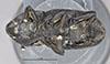 http://mczbase.mcz.harvard.edu/specimen_images/entomology/large/MCZ-ENT00000124_Scyphophorus_robustior_hav.jpg