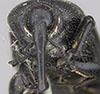 http://mczbase.mcz.harvard.edu/specimen_images/entomology/large/MCZ-ENT00000124_Scyphophorus_robustior_hef.jpg