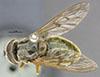 http://mczbase.mcz.harvard.edu/specimen_images/entomology/large/MCZ-ENT00000888_Chrysochlamys_croesus_had.jpg