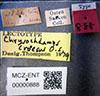 http://mczbase.mcz.harvard.edu/specimen_images/entomology/large/MCZ-ENT00000888_Chrysochlamys_croesus_lbs.jpg