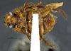 http://mczbase.mcz.harvard.edu/specimen_images/entomology/large/MCZ-ENT00003334_Ochodaeus_sparsus_hav.jpg