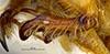 http://mczbase.mcz.harvard.edu/specimen_images/entomology/large/MCZ-ENT00003337_Ochodaeus_complex_ftb.jpg