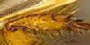 http://mczbase.mcz.harvard.edu/specimen_images/entomology/large/MCZ-ENT00003337_Ochodaeus_complex_htb.jpg