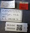 http://mczbase.mcz.harvard.edu/specimen_images/entomology/large/MCZ-ENT00003339_Ochodaeus_striatus_lbs.jpg