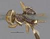 http://mczbase.mcz.harvard.edu/specimen_images/entomology/large/MCZ-ENT00007724_Rhagoletis_zephyria_had.jpg